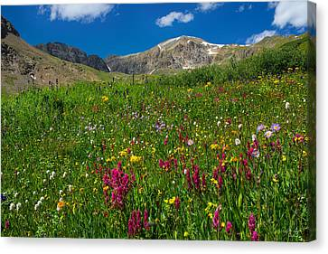 Colorado 14er Handies Peak Canvas Print by Aaron Spong