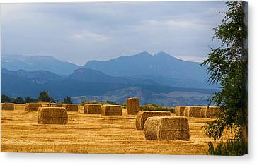 Colorado Agriculture Farming Panorama View Pt 2 Canvas Print by James BO  Insogna