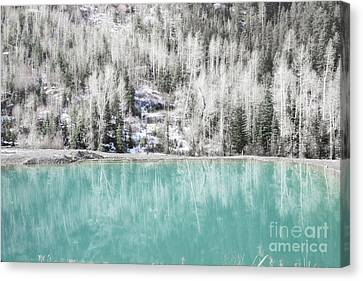 Colorado Aqua Woodland Forest Landscape Canvas Print by Andrea Hazel Ihlefeld