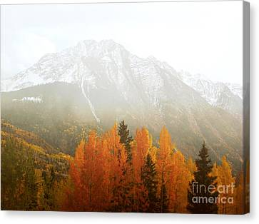 Colorado Aspen Trees Mountain Dreamy Landscape Canvas Print by Andrea Hazel Ihlefeld