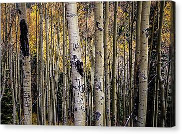 Colorado Aspens Canvas Print