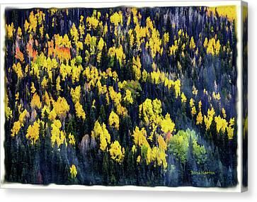 Colorado Autumn #5 Canvas Print
