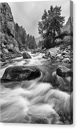 Colorado Black And White Canyon Portrait Canvas Print by James BO  Insogna