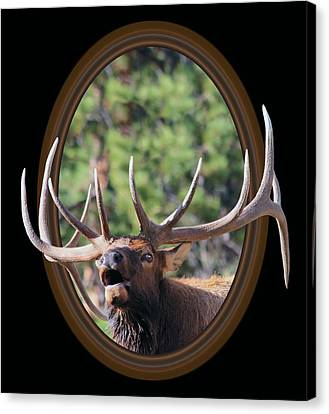 Out Of Frame Canvas Print - Colorado Bull Elk by Shane Bechler