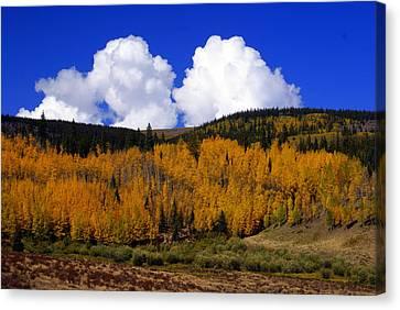 Colorado Fall 2 Canvas Print by Marty Koch