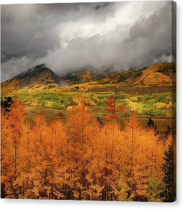 Colorado Fall Colors  Canvas Print by Lena  Owens OLena Art