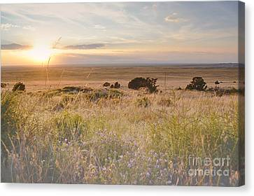 Colorado Field Sunset Landscape Canvas Print by Andrea Hazel Ihlefeld