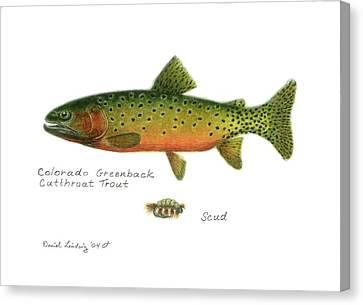 Colorado Greenback Cutthroat Trout Canvas Print