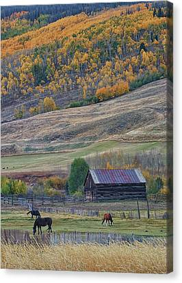 Colorado Horse Ranch Canvas Print by Brian Kerls