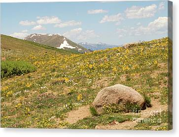 Colorado Independence Pass Canvas Print by Christine Belt