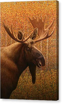 Colorado Moose Canvas Print by James W Johnson