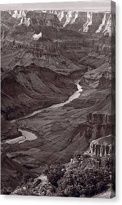 Colorado River At Desert View Grand Canyon Canvas Print by Steve Gadomski