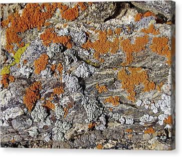 Colorado Rock Life Canvas Print