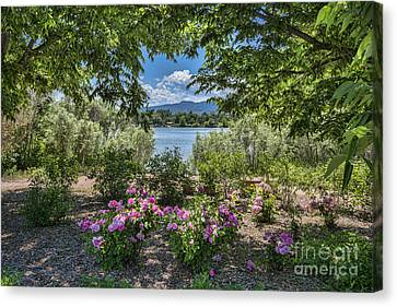 Fort Collins Canvas Print - Colorado Rose Garden by Keith Ducker
