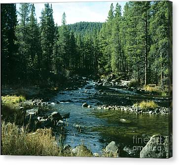 Colorado Stream1 Canvas Print