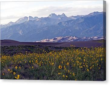 Colorado Style Landscape Sunflowers On The Sangre De Cristos Canvas Print by Scotts Scapes