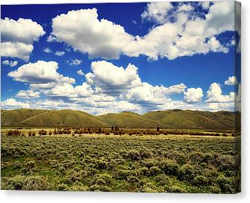 Colorado Vista Canvas Print by L O C