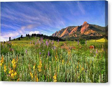 Vista Canvas Print - Colorado Wildflowers by Scott Mahon