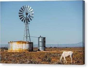 Colorado Windmill Canvas Print by Paul Freidlund