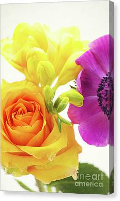 Colored Flowers Canvas Print