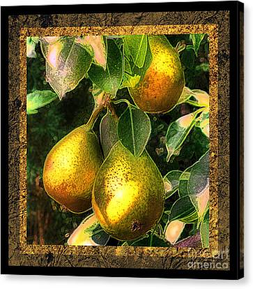 Colored Pears Canvas Print by Sari Sauls