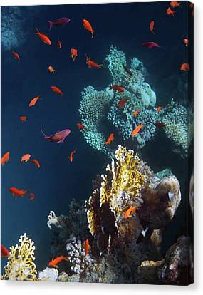 Colorful And Beautiful Sealife Canvas Print