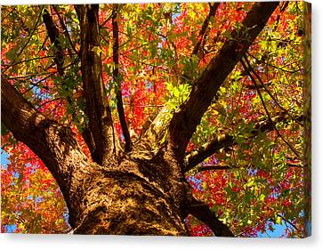 Colorful Autumn Abstract Canvas Print by James BO  Insogna
