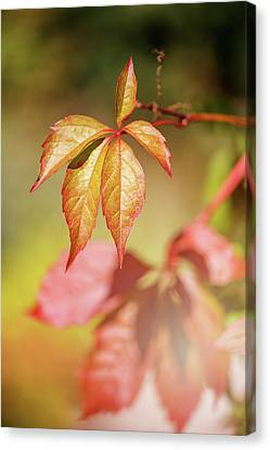Colorful Autumn Canvas Print by Cindy Grundsten