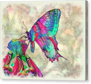 Colorful Butterfly 2 Canvas Print by Jack Zulli