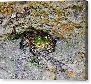 Canvas Print featuring the photograph Colorful Camo by Al Powell Photography USA