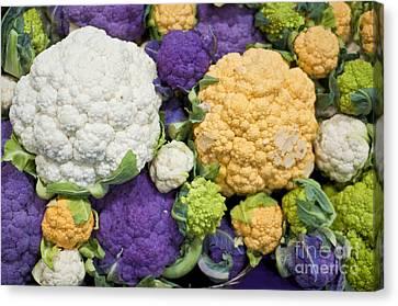Colorful Cauliflower Canvas Print