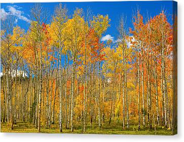 The Lightning Man Canvas Print - Colorful Colorado Autumn Landscape by James BO  Insogna