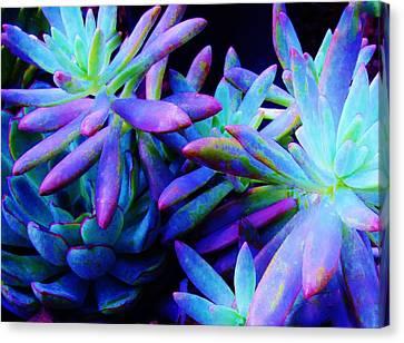Colorful Dancing Succulents Canvas Print
