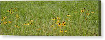 Canvas Print featuring the photograph Colorful Field by Wanda Krack