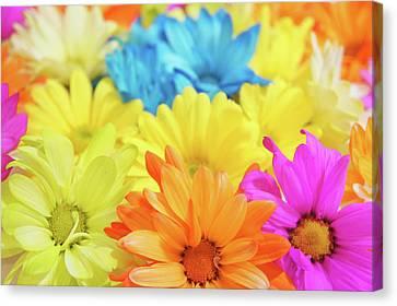 Flower Power Canvas Print by Art Spectrum