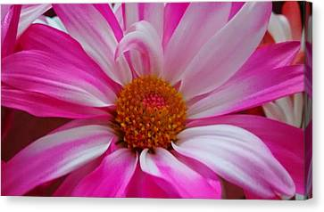 Colorful Flower Canvas Print by Dustin Soph