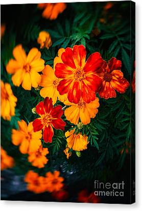 Canvas Print featuring the photograph Colorful Flowers by Silvia Ganora