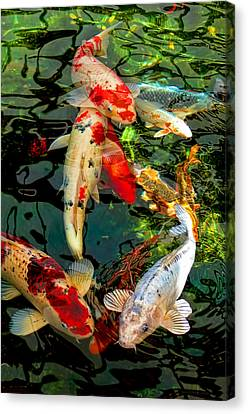 Colorful  Japanese Koi Fish Canvas Print by Jennie Marie Schell