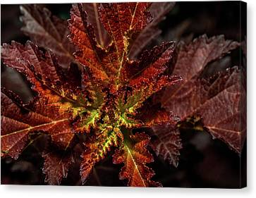 Canvas Print featuring the photograph Colorful Leaves by Paul Freidlund
