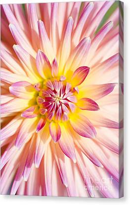 Colorful Macro Dahlia Flower. Beauty In Springtime Canvas Print by Jorgo Photography - Wall Art Gallery