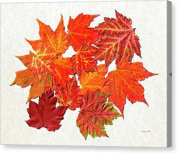 Foliage Canvas Print - Colorful Maple Leaves by Christina Rollo
