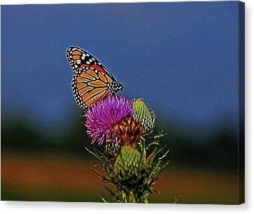 Canvas Print featuring the photograph Colorful Monarch by Sandy Keeton
