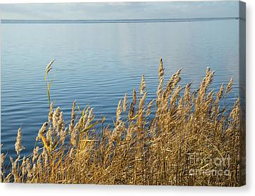Colorful Reeds Canvas Print