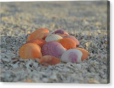 Canvas Print featuring the photograph Colorful Scallop Shells by Melanie Moraga