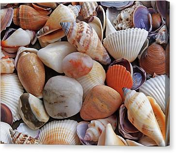 Colorful Shells And Pebbles Canvas Print