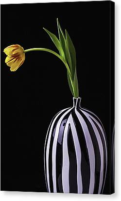 Colorful Tulip In Vase Canvas Print by Garry Gay