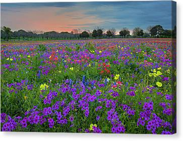Colorful Wildflowers Of Texas 1 Canvas Print by Rob Greebon