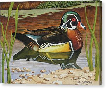 Colorful Wood Duck Canvas Print by Phil Hopkins