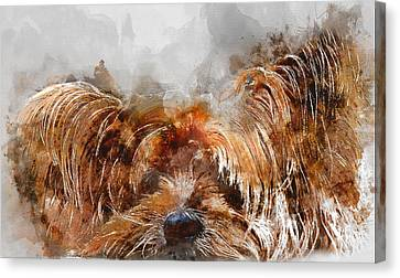 Colorful Yorkshire Terrier Dog Portrait - By Diana Van Canvas Print by Diana Van