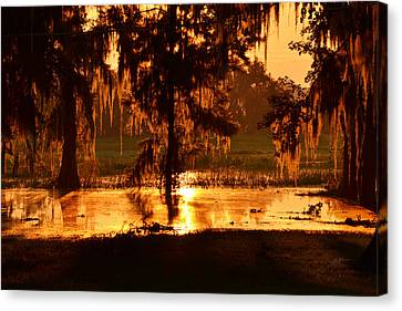 Coloring The Swamp With Sunrise Canvas Print